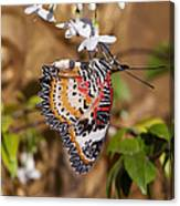 Leopard Lacewing Butterfly Dthu619 Canvas Print