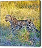 Leopard On The Prowl Canvas Print