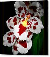 Leopard Orchid Canvas Print