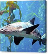 Leopard Shark Canvas Print