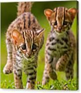 Leopard Stampede Canvas Print