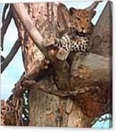 Leopard Up A Tree Canvas Print