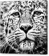 Leo's Portrait Canvas Print