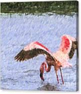 Lesser Flamingo Filter Feeding Lake Nakuru Kenya Canvas Print
