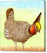 Lesser Prairie Chicken Canvas Print