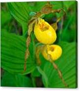 Lessor Yellow Ladys Slipper Orchid Of The Baileys Harbor Range Lights Canvas Print