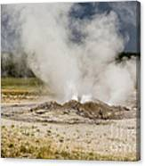 Letting Off Steam - Yellowstone Canvas Print