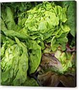 Lettuce Go Forward Canvas Print