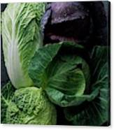 Lettuce Canvas Print