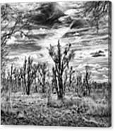 Levy Lake Canvas Print