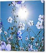 Lewis Blue Flax Backlit Canvas Print