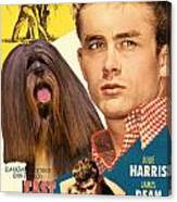 Lhasa Apso Art - East Of Eden Movie Poster Canvas Print