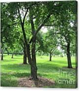 Liberty Hall - Apple Orchards Canvas Print
