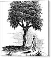 Liberty Tree, 1765 Canvas Print