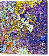 Lichen Abstract Canvas Print