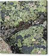 Lichen And Granite Img 6187 Canvas Print
