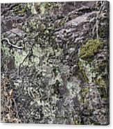 Lichen And Moss Canvas Print