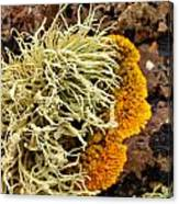 Lichen And Weed Canvas Print