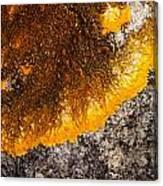 Lichen It Canvas Print