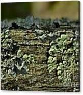 Lichen Macro I Canvas Print