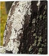 Lichen On Headstone Canvas Print