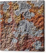 Lichen On Sandstone Canvas Print
