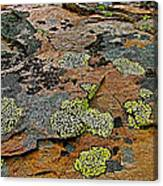 Lichens Along Trail To Plain Of Six Glaciers In Banff National Park-alberta-canada Canvas Print