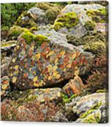Lichens And Moss In Glen Strathfarrar Canvas Print