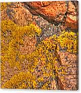 Lichens On The Shoreline Rocks 2 Canvas Print