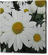 Life Blooming  Canvas Print