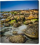 Life Clings As The Tides Ebb Canvas Print