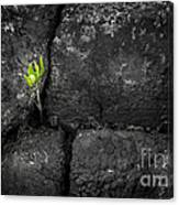 Life Finds A Way Canvas Print