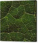 Life Grid In A Leaf Canvas Print