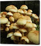 Life Of The Forest Floor Canvas Print