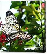 Light And Butterfly Canvas Print