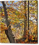 Light Days Canvas Print
