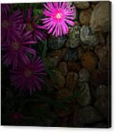 Light In The Rock Garden Canvas Print