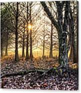 Light In The Trees Canvas Print