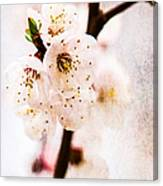 Light Of Spring 3 Canvas Print
