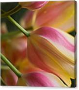 Light Of Spring Canvas Print