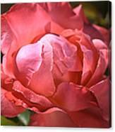 Light On Rose Canvas Print