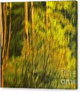 Light Painting Canvas Print