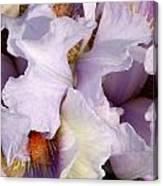 Light Purple Irises 2 Canvas Print