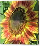 Light-shade Sunflower Canvas Print