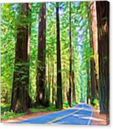 Light Through The Redwoods Canvas Print