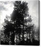 Light Through The Trees Canvas Print