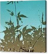 Torquoise Haiku Canvas Print