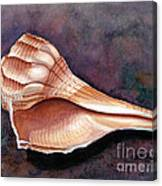 Lightning Whelk Canvas Print