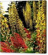 Ligularia And Astilbe Canvas Print