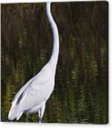 Like A Great Egret Monument Canvas Print